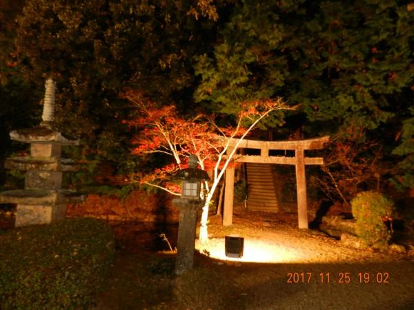 1711125 朝、浄瑠璃寺×岩船寺 & 夜、観音寺のライトアップ